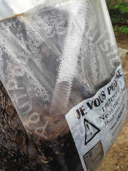 photo des chenilles processionnaires dans le sac collecteur du sac colleur du piège à chenille