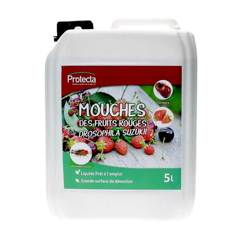 mouche-suzukii
