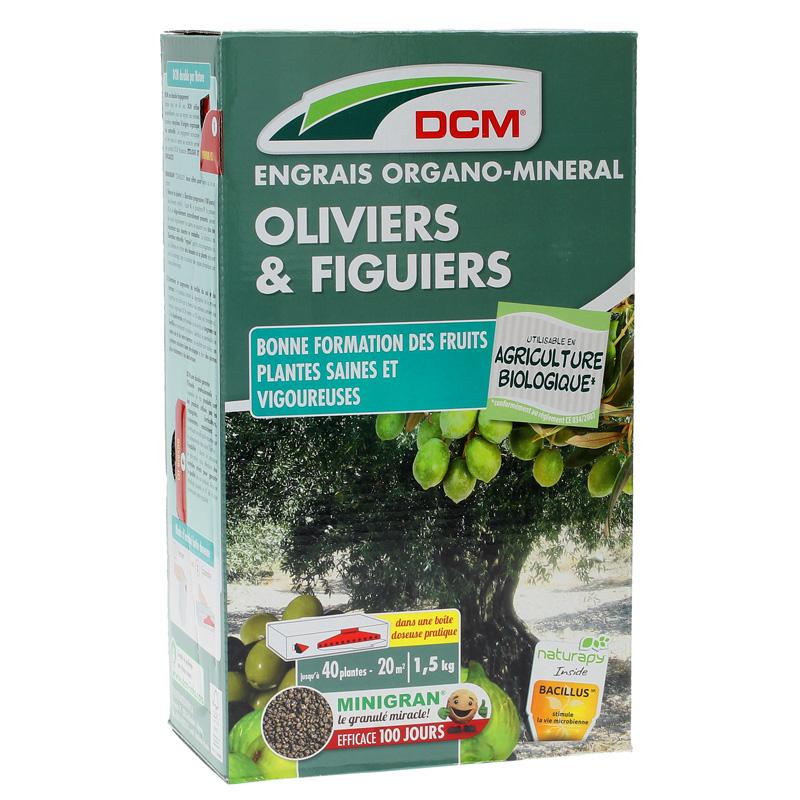 mouche-olive