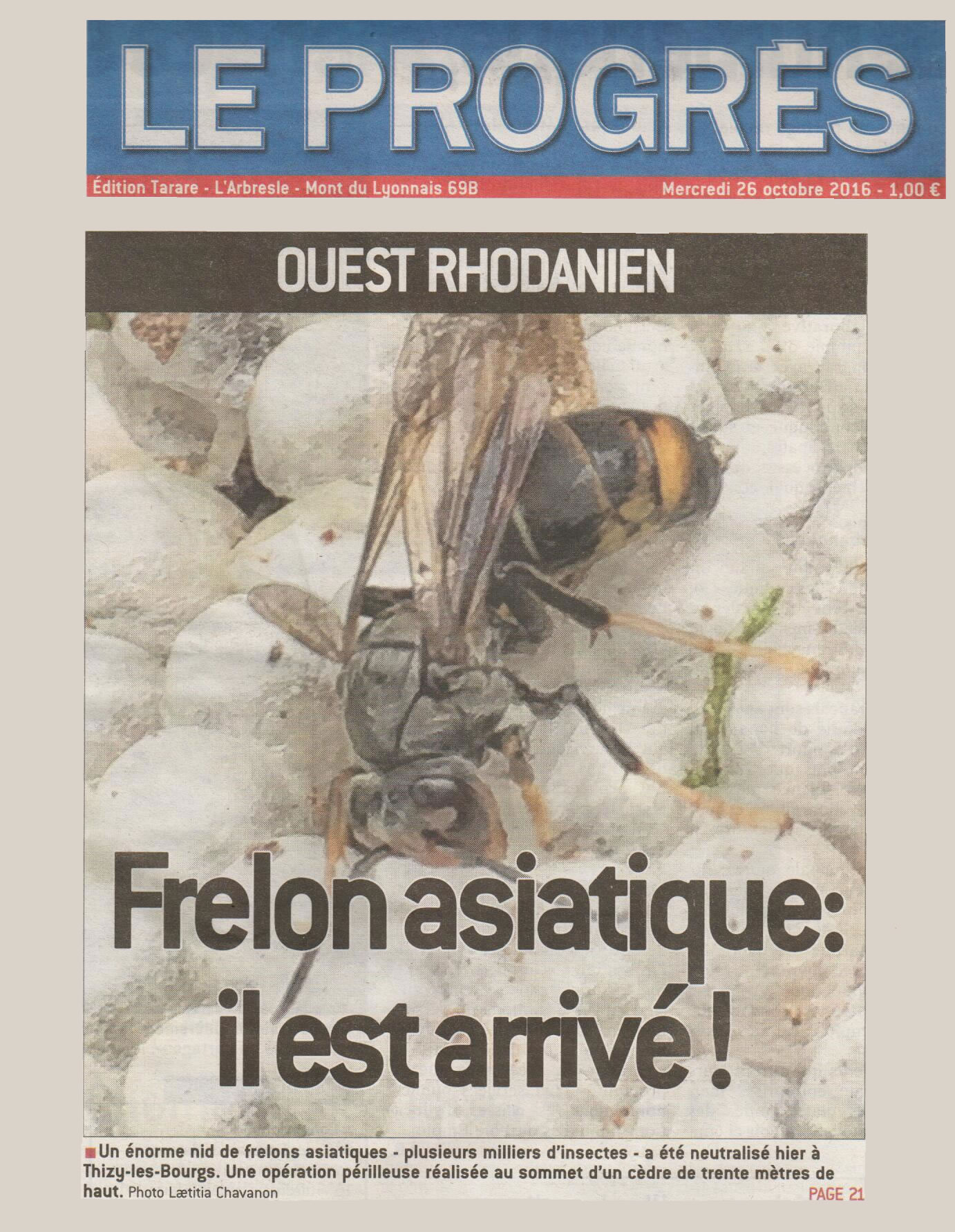 Actualite attention le premier nid de frelons asiatiques - Repulsif frelon asiatique ...
